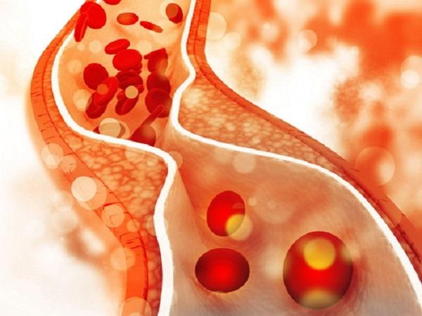 Nấm Linh Chi có tác dụng tăng cường tuần hoàn máu hiệu quả.